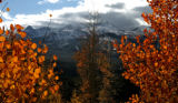 Changing Aspen trees stands against the Ten Mile Range and Breckenridge Ski area, Monday...