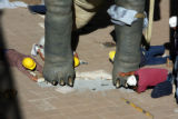 Workers apply cement to the feet  of a Camarasaurus , one of two large-scale dinosaur sculptures...
