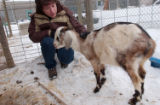 Cary Rentola pets a pigmy goat at the Larimer Humane Society in Fort Collins, CO on December 30,...