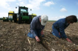 Dan and Peggy Brown, third generation Yuma County farmers checks the corn planted in a field at...