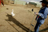 DM0529  Cheech the goose follows Robin Davis as she and her husband Jay tend to the animals at...