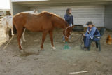 DM0546  Robin and Jay Davis tend to the horses at their equestrian center, Mustang Hollow, near...