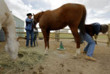 DM0547  Robin and Jay Davis tend to the horses at their equestrian center, Mustang Hollow, near...