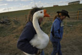 "DM0555  Jay Davis carries his goose ""Cheech"" back to the barn for the night after he and..."