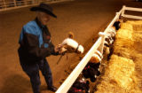 (Denver, CO., January 13, 2004) Volunteer Vivian Wilson cleans up the horses after the stick horse...