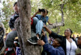 (PG18320) People climb trees in Civic Center Park to see get a glimpse of Democratic Presidential...