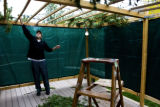 Jason Williamson (cq) adds pine branches for an organic roof on top of his sukkah.   The holiday...