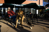 Susan Moon (cq) sits with her german shepherd dog Tango (cq) as Olivia (cq) a maltese and yorkie...