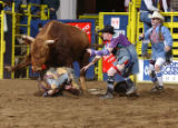 Josh Kennedy of Calhan, Colo., is trampled by the bull after rolling under it Saturday Jan. 15,...