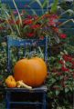 (10/13/04, Denver, CO) Rob Proctor's garden in the Fall (Judy Walgren, Rocky Mountain News)