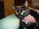 Dumb Friends League is investigating the case of Angel, a stray cat - now up for adoption - who...