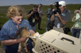 Sigrid Noll Ueblacker(cq) prepares to release a Northern Harrier Hawk on property of Rocky Flats,...