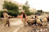 NYT23 - (NYT23) BAGHDAD, Iraq -- Jan. 24, 2005 -- IRAQ-3 -- An Iraqi national guardsman hands out...