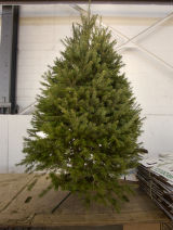 (Denver, Colo., Dec. 2, 2004) Christmas trees at Nick's Landscaping in Commerce City.  Douglas...
