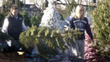 Denver, Colo.-December 7,2004-Troy and Lena Wallace of Park Hill take an Alpine Fir off the...