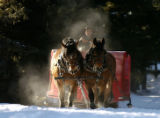(BRECKENRIDGE Colo., November 23, 2004)  Paul Huxman drives his team of Bay Belgin Percheron  on a...