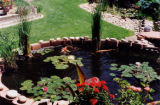 photos of the backyard ponds of Bob Hoffman in Littleton for Dig story by Debra Melani