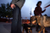 Dog owners Bettina Huber (cq) of Denver (left-cut off), and Natalie Menten (cq) of Lakewood let...