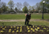 Tom Cruz, (cq), works a nearly complete section of newly planted Coleus Golden Bedder...