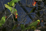 Lorikeet Adventure Experience located within the Denver Zoo, offers a media introduction to the...