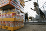 DLM1535  Two dogs bark as cases of donated pet food are dropped off at the Colorado Humane Society...