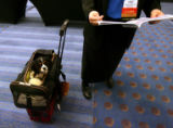Tommy, a 7 month old Cavalier King Charles Spaniel, waits while Robin Downing (cq), DVM, CVA, of...