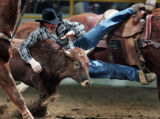 Clint Robinson from Spanish Fork UT flies off his horse as he runs down a steer during the steer...