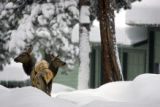 The foothills around Denver have been hit particularly hard during the recent snow storms with...