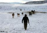 Justin Iacovetto heads to the pasture to get a team of horses, to pull a feed sleigh, Wednesday...