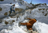 Nick Peterson (CQ), 22, walks past a dead pregnant Herford heifer in a frozen over creek bed in...