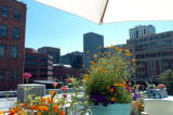 9/7/04, Denver, CO) Gretchen Bunn's rooftop garden  (JUDY WALGREN/ROCKY MOUNTAIN NEWS)