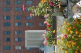 (8/03/2004, DENVER, CO)  Gretchen Bunn's rooftop garden.  (PHOTO BY JUDY WALGREN/ROCKY MOUNTAIN...