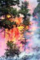 Trees and other vegetation go up in flames at theTyndall wild land fire near the town of...