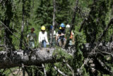U.S.  Forest Service employees conduct a tour of a blow down area along road FS 369 in the San...