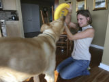 Laura Sobon tries to wrench the frisbee from family dog Toby and she lives in Glass House...