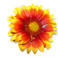 (9/15/04, Denver, CO) Gaillardia, Arizona Sun at the  Welby Test Garden  (JUDY WALGREN/ROCKY...
