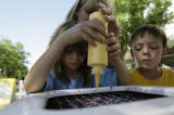 Cameron Waters, 7, pours yellow paint onto her spin art while her brother, Colin, 9, looks on at...