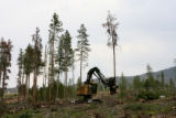 Tad Fry (cq) operates a Tree Harvester, while clearing dead beetle kill trees, along hwy 9,...