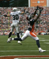 0061 Denver Broncos wide receiver Javon Walker drops a pass in the end zone Oakland Raiders saftey...