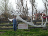 Dig Lawn Ornaments. I live in an area where some people like to hang elk and deer antlers on their...