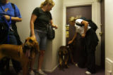 A team of bloodhounds (who's owners did not wish to be identified) sniff the door of the apartment...