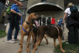 A team of bloodhounds (who's owners did not wish to be identified) wait outside of the apartment...