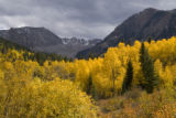 The afternoon sun lights up autumn aspens in the Maroon Bells - Snowmass Wilderness near Ashcroft,...