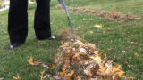 A Denver Jail inmate rakes leaves at the home of Augustine Narcisse in her Denver neighborhood....