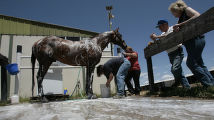 Megan Houser ( left to right) and trainer Elizabeth Brand (cq) give Djet Set De Falgas, a wash as...