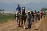 Horses are led to the paddock area before races, Friday morning, May 30, 2008, Arapahoe Park,...