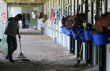 Horses get feed at the Elizabeth Brand Stables, as the area is cleaned, Friday morning, May 30,...