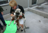 (CS1094) Laney maes picks up her dog, Yogi, dressed as Indidana Jones, at Howlween, a canine...
