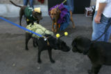 (CS1113) Dogs and their companions enjoy Howlween, a canine costume contest and yappy hour in...