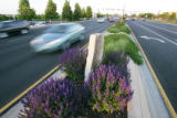 Landscaping in the median on 104th Ave., west of I-25.  June 13, 2008.  (ELLEN JASKOL/ROCKY...